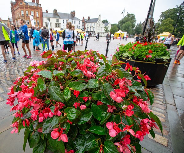 Red flowers in a planter in the market square