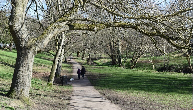 Have your say on Tree and Woodland Strategy for Darlington